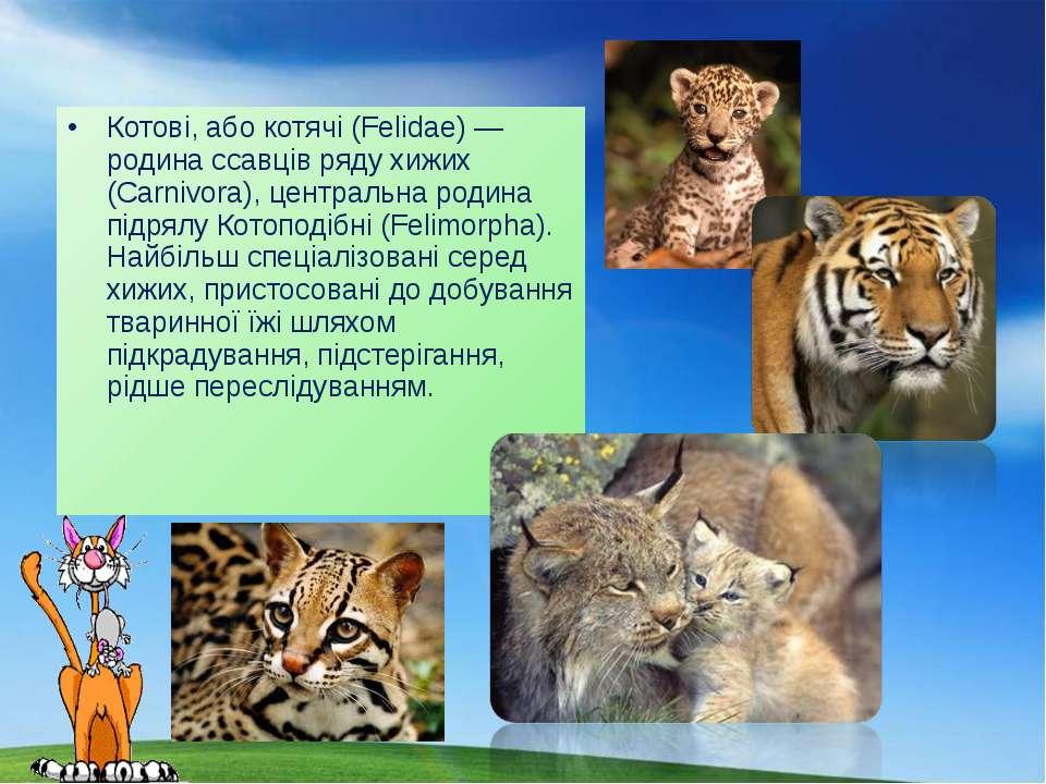 Котові, або котячі (Felidae) — родина ссавців ряду хижих (Carnivora), централ...