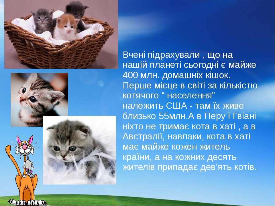 Вчені підрахували , що на нашій планеті сьогодні є майже 400 млн. домашніх кі...