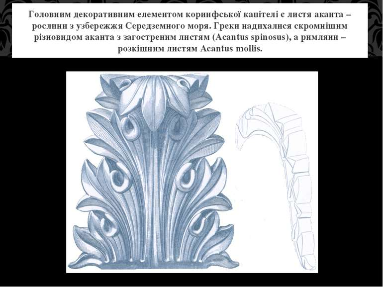 Головним декоративним елементом коринфської капітелі є листя аканта – рослини...
