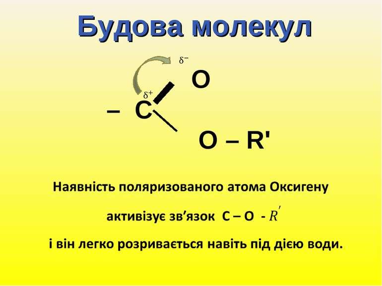 Будова молекул O – C O – R'