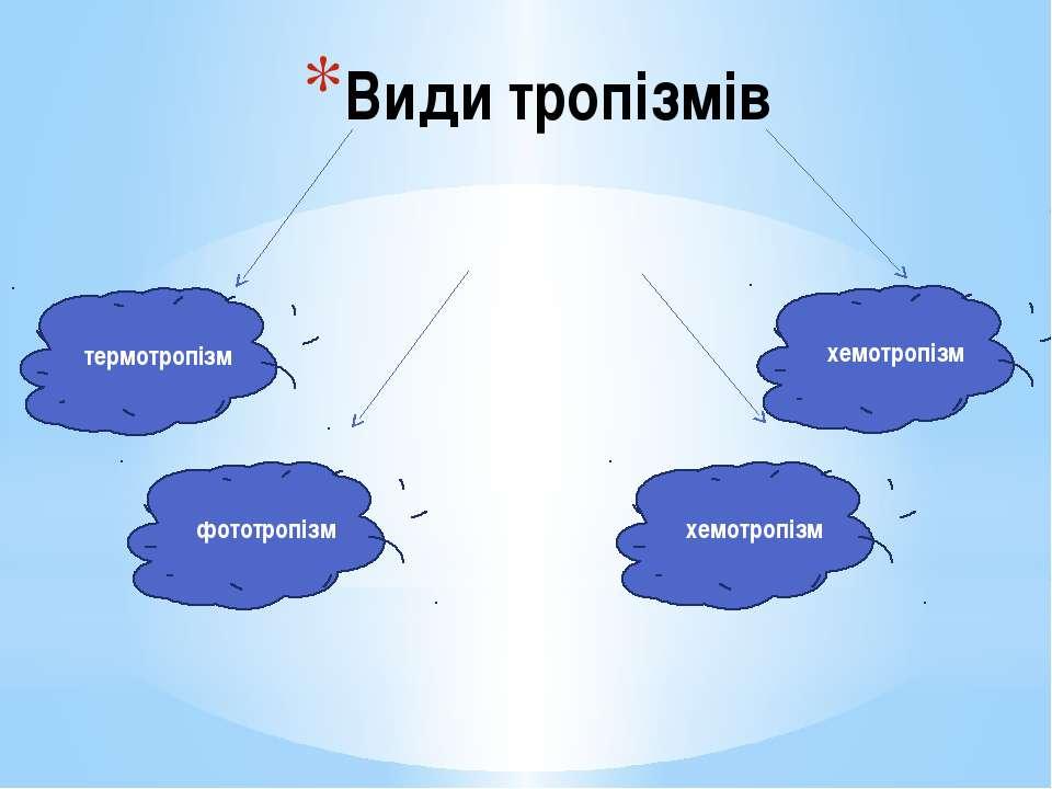 Види тропізмів термотропізм фототропізм хемотропізм хемотропізм