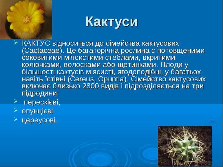 Кактуси КАКТУС відноситься до сімейства кактусових (Cactaceae). Це багаторічн...
