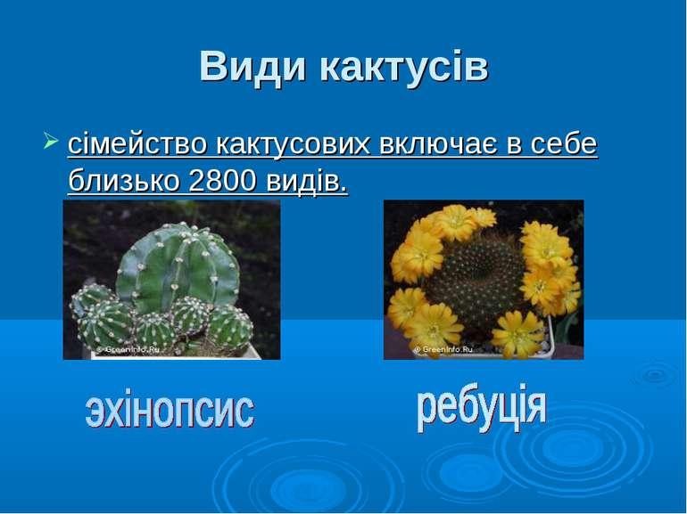 Види кактусів сімейство кактусових включає в себе близько 2800 видів.