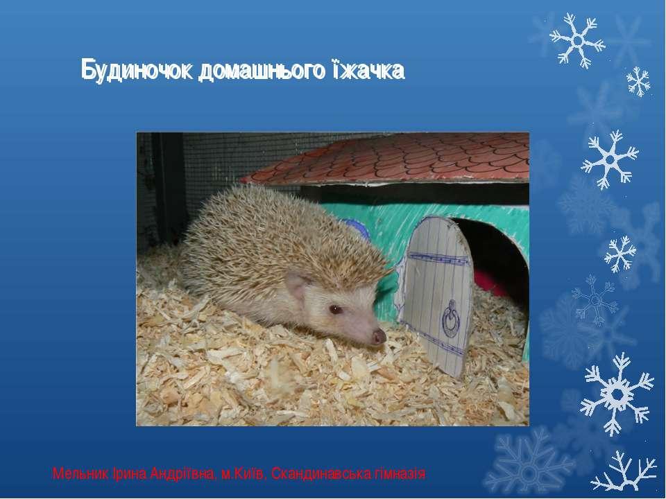 Будиночок домашнього їжачка Будиночок домашнього їжачка Мельник Ірина Андріїв...