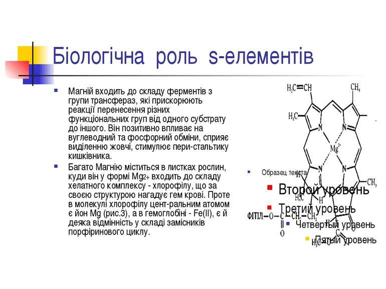 Біологічна роль s-елементів Магній входить до складу ферментів з групи трансф...