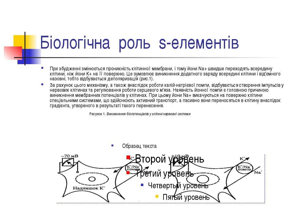 Біологічна роль s-елементів При збудженні змінюється проникність клітинної ме...