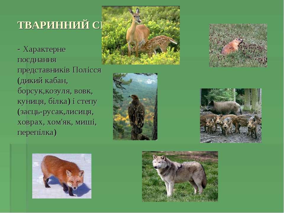 ТВАРИННИЙ СВІТ - Характерне поєднання представників Полісся (дикий кабан, бор...