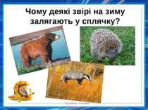 Чому деякі звірі на зиму залягають у сплячку? Куракса Оксана Миколаївна