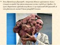 Всех европейских фермеров с лёгкостью обогнал крестьянин Халил Семхат из горо...
