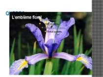 QUEBEC L'emblème floral