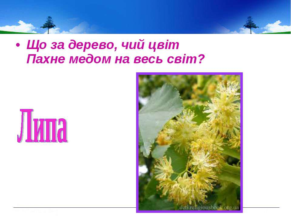 Що за дерево, чий цвіт Пахне медом на весь світ?