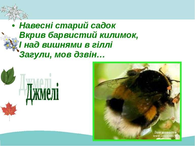 Навесні старий садок Вкрив барвистий килимок, І над вишнями в гіллі Загули, м...