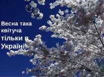 Весна така квітуча тільки в Україні!