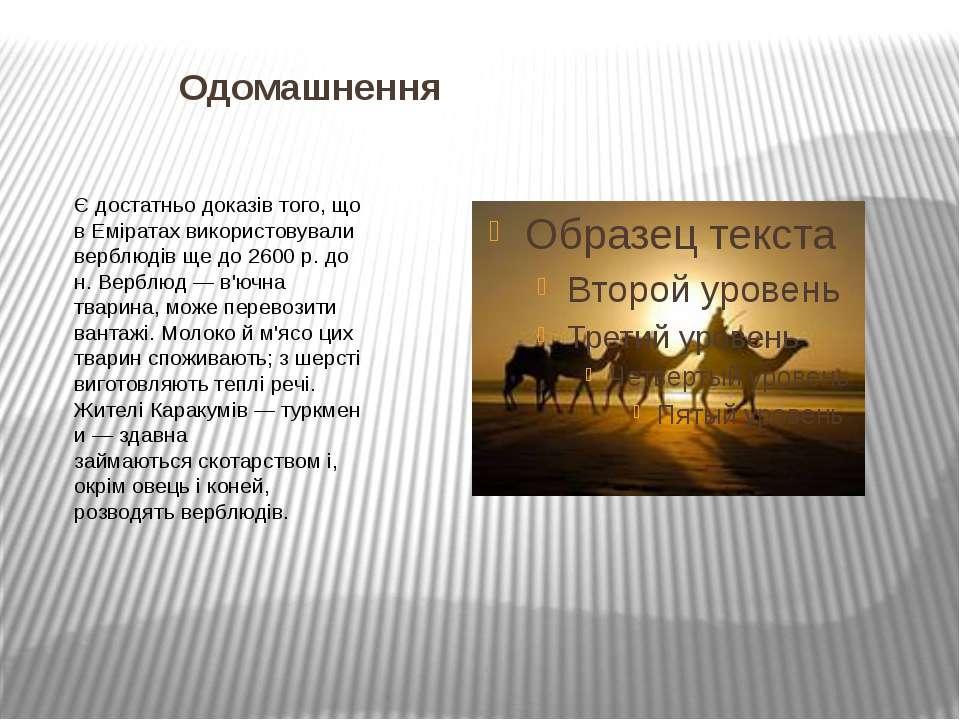 Одомашнення Є достатньо доказів того, що в Еміратах використовували верблюдів...