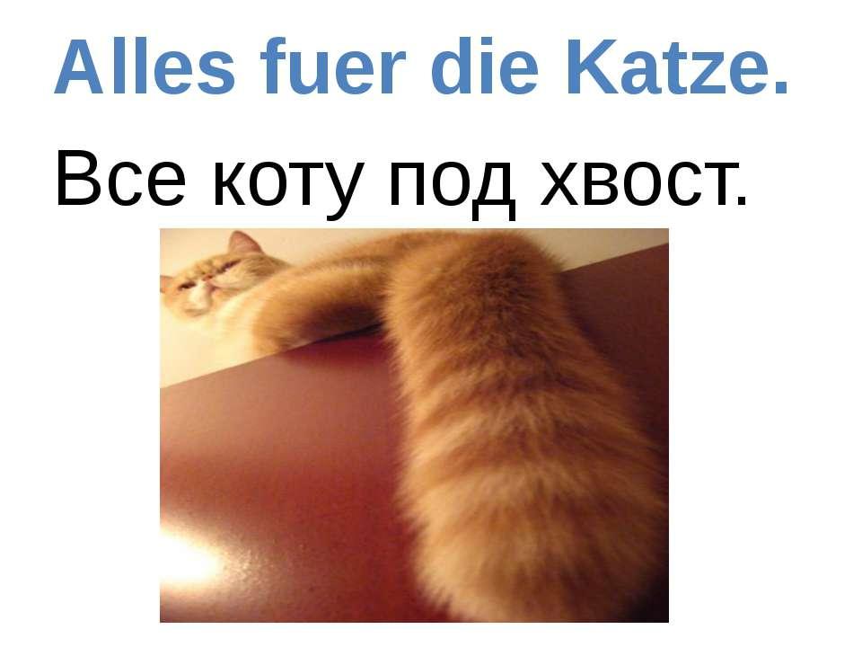 Alles fuer die Katze. Все коту под хвост.