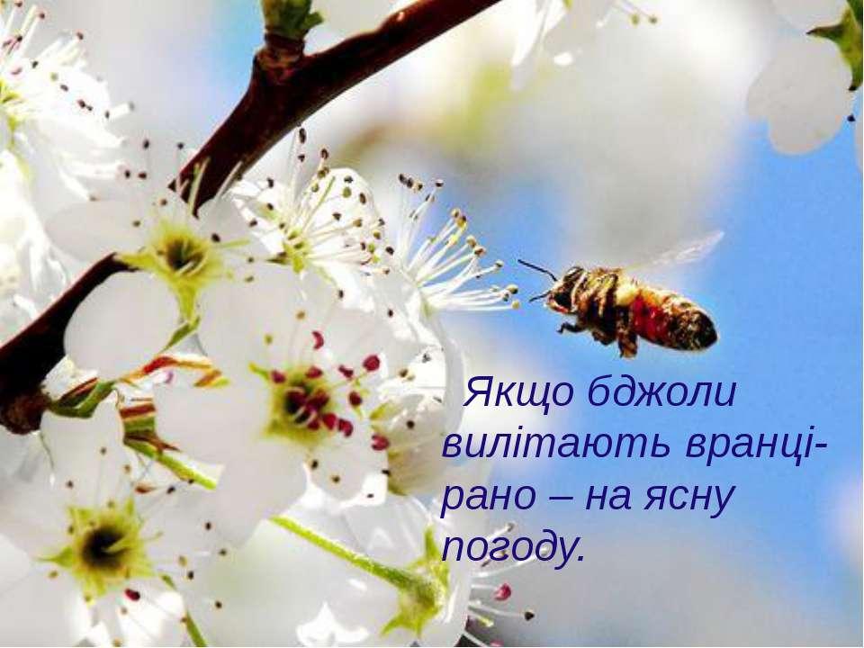 Якщо бджоли вилітають вранці-рано – на ясну погоду.