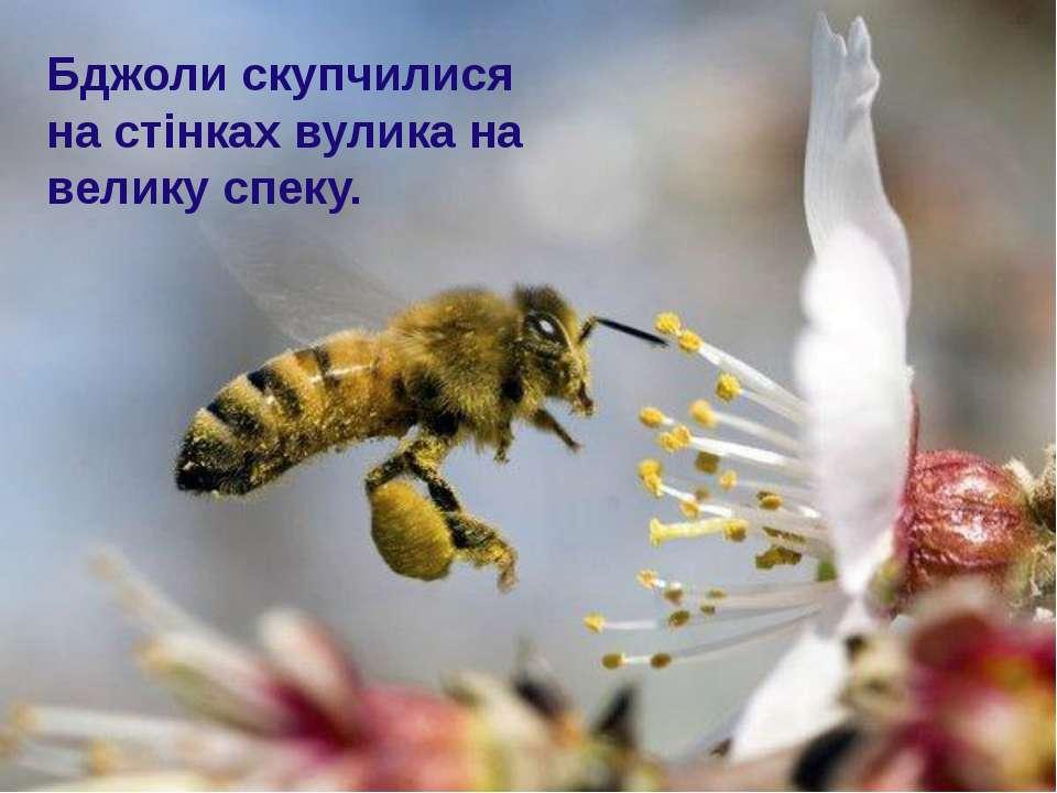Бджоли скупчилися на стінках вулика на велику спеку.