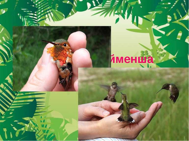 Колібрі – найменша пташка на землі