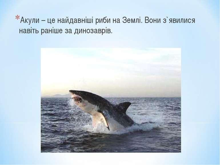 Акули – це найдавніші риби на Землі. Вони з`явилися навіть раніше за динозаврів.