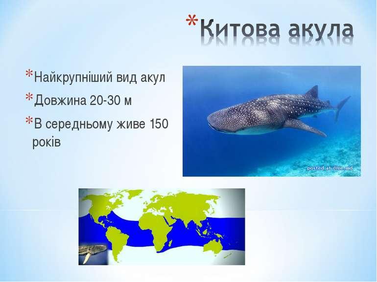 Найкрупніший вид акул Довжина 20-30 м В середньому живе 150 років