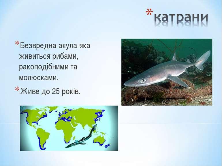 Безвредна акула яка живиться рибами, ракоподібними та молюсками. Живе до 25 р...