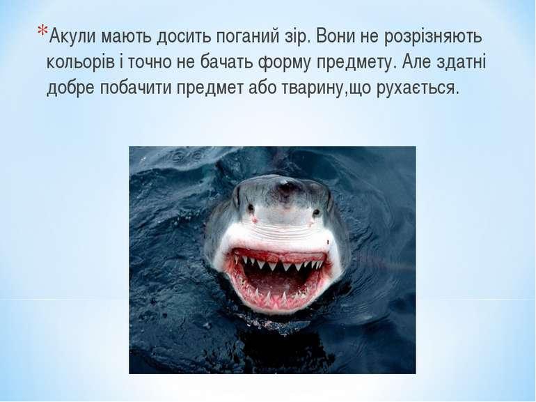 Акули мають досить поганий зір. Вони не розрізняють кольорів і точно не бачат...