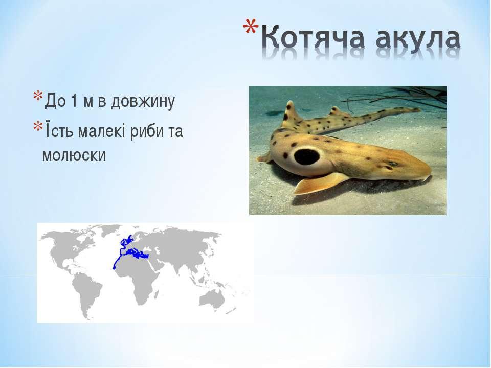 До 1 м в довжину Їсть малекі риби та молюски