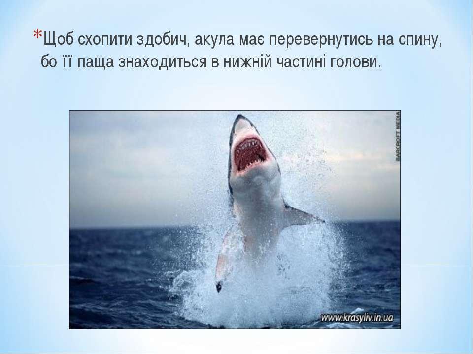 Щоб схопити здобич, акула має перевернутись на спину, бо її паща знаходиться ...