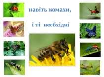 навіть комахи, і ті необхідні
