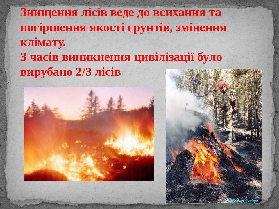 Знищення лісів веде до всихання та погіршення якості грунтів, змінення клімат...