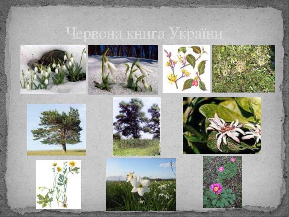 Червона книга України 541 вид рослин і грибів занесені до червоної книги України