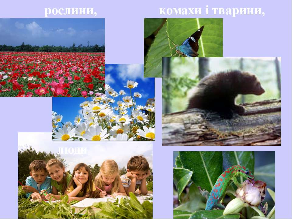 рослини, комахи і тварини, люди