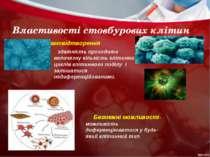 Властивості стовбурових клітин Самовідтворення здатність проходити величезну ...