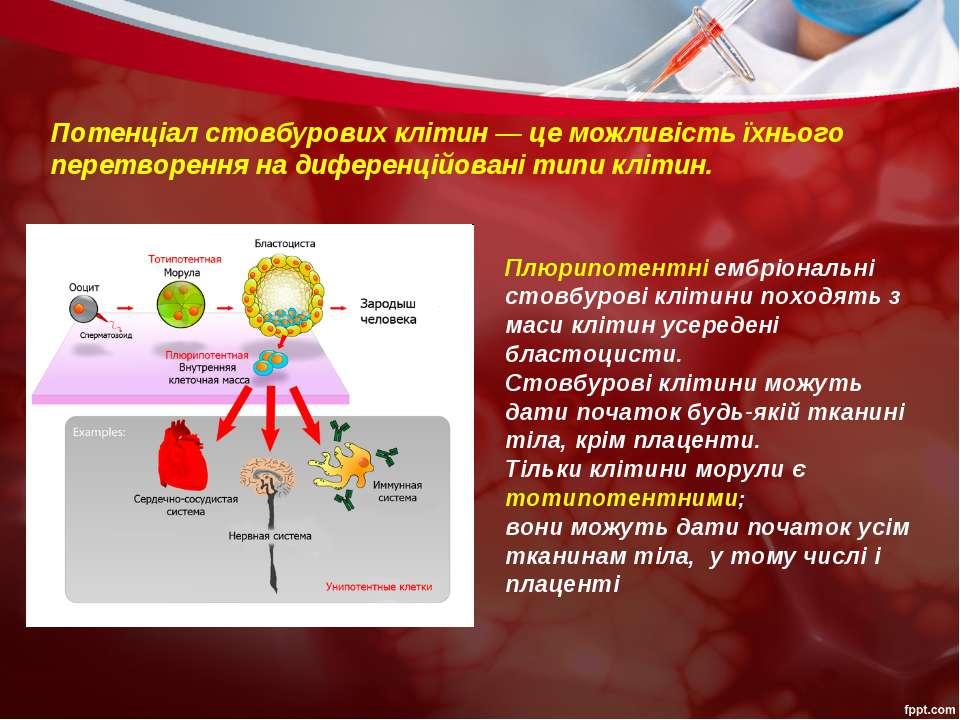 Плюрипотентні ембріональні стовбурові клітини походять з маси клітин усереден...