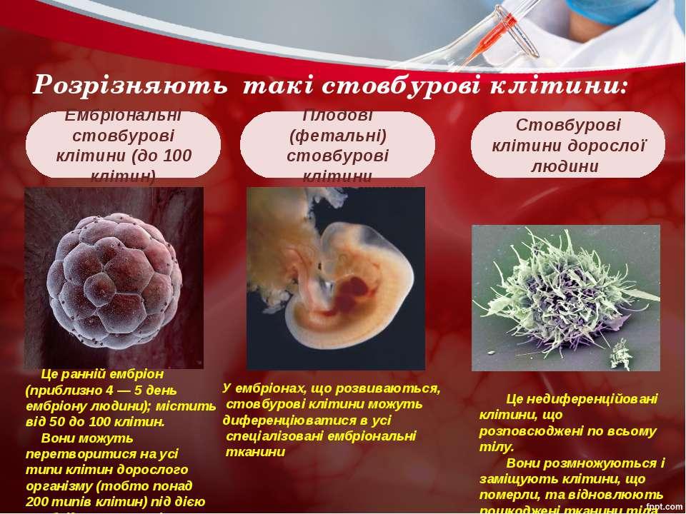 Розрізняють такі стовбурові клітини: Плодові (фетальні) стовбурові клітини Ем...