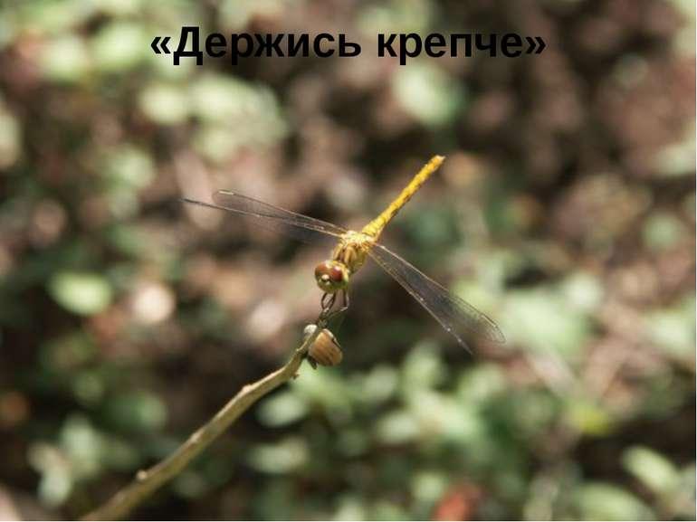 «Держись крепче» FokinaLida.75@mail.ru