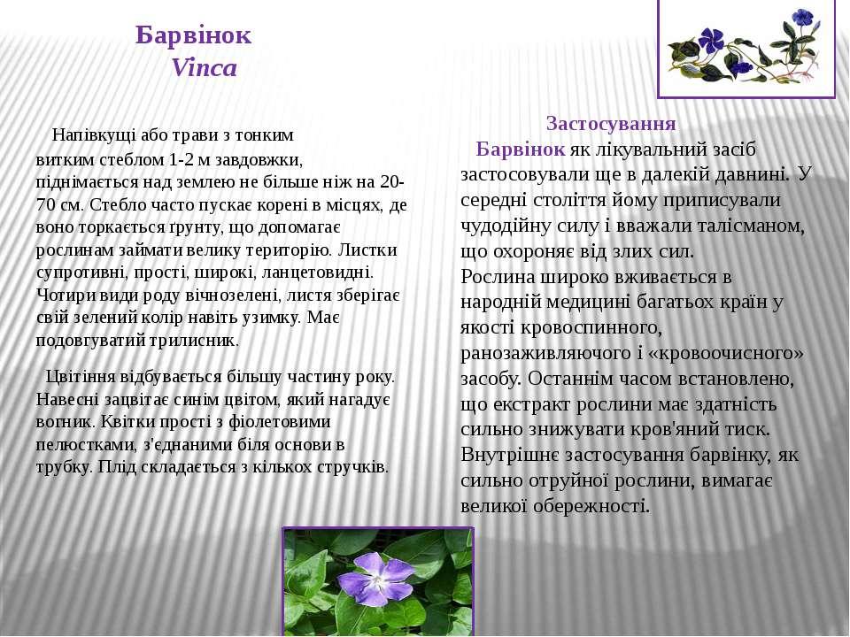 Барвінок Vinca Напівкущіаботравиз тонким виткимстеблом1-2 м завдовжки, п...