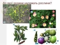 До якої родини належать рослини? 12 15 13