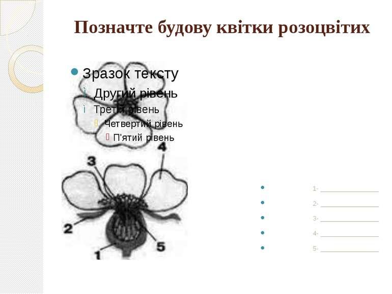Позначте будову квітки розоцвітих 1- ________________ 2- ________________ 3- ...