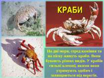 На дні моря, серед каміння та на піску живуть краби. Вони бувають різних виді...