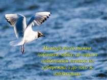 На морі часто можна побачити чайку, це одна із найбільших пташок на узбережжі...
