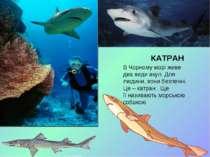 КАТРАН В Чорному морі живе два види акул. Для людини, вони безпечні. Це – кат...