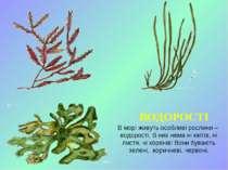 ВОДОРОСТІ В морі живуть особливі рослини – водорості. В них нема ні квітів, н...
