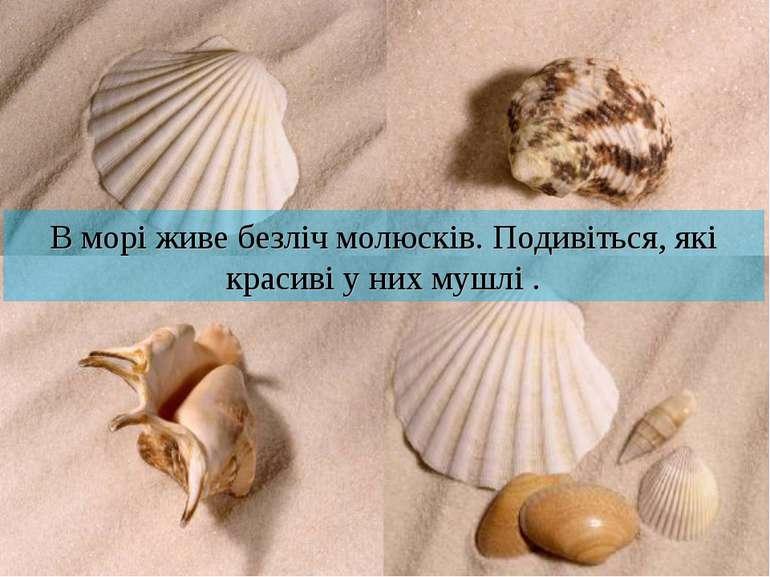 В морі живе безліч молюсків. Подивіться, які красиві у них мушлі .