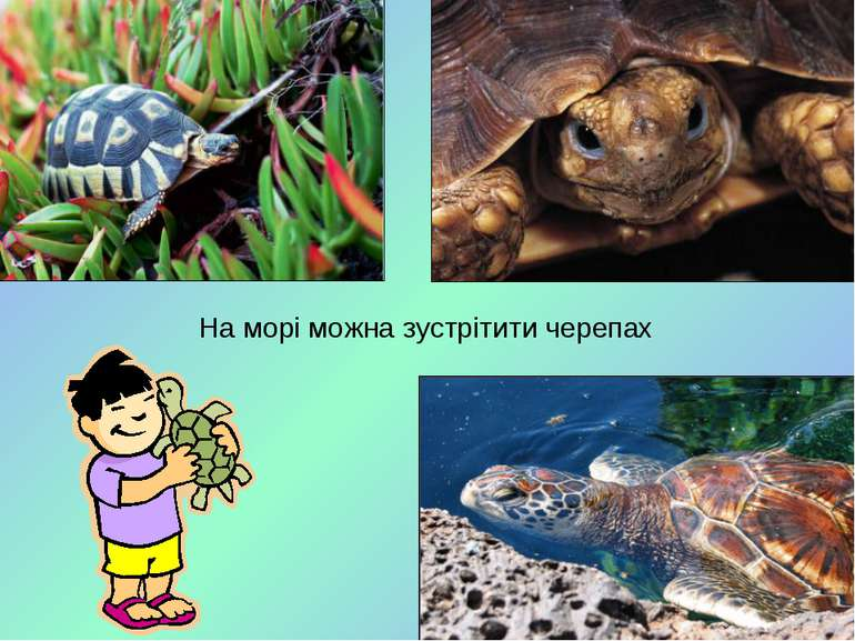 На морі можна зустрітити черепах