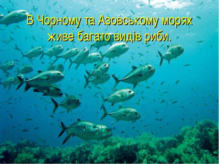 В Чорному та Азовському морях живе багато видів риби.