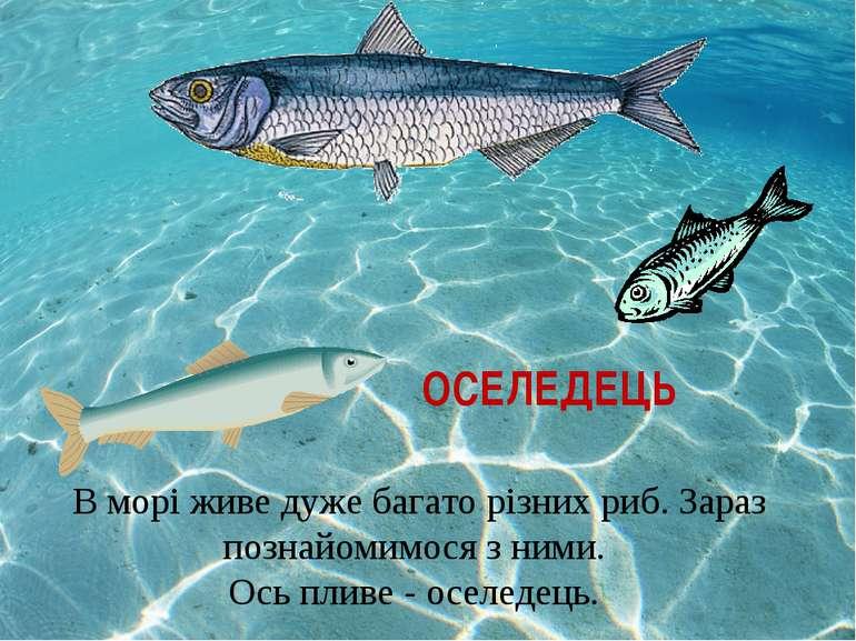 ОСЕЛЕДЕЦЬ В морі живе дуже багато різних риб. Зараз познайомимося з ними. Ось...