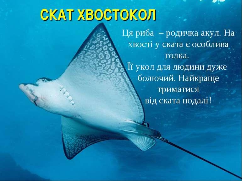 СКАТ ХВОСТОКОЛ Ця риба – родичка акул. На хвості у ската є особлива голка. Її...