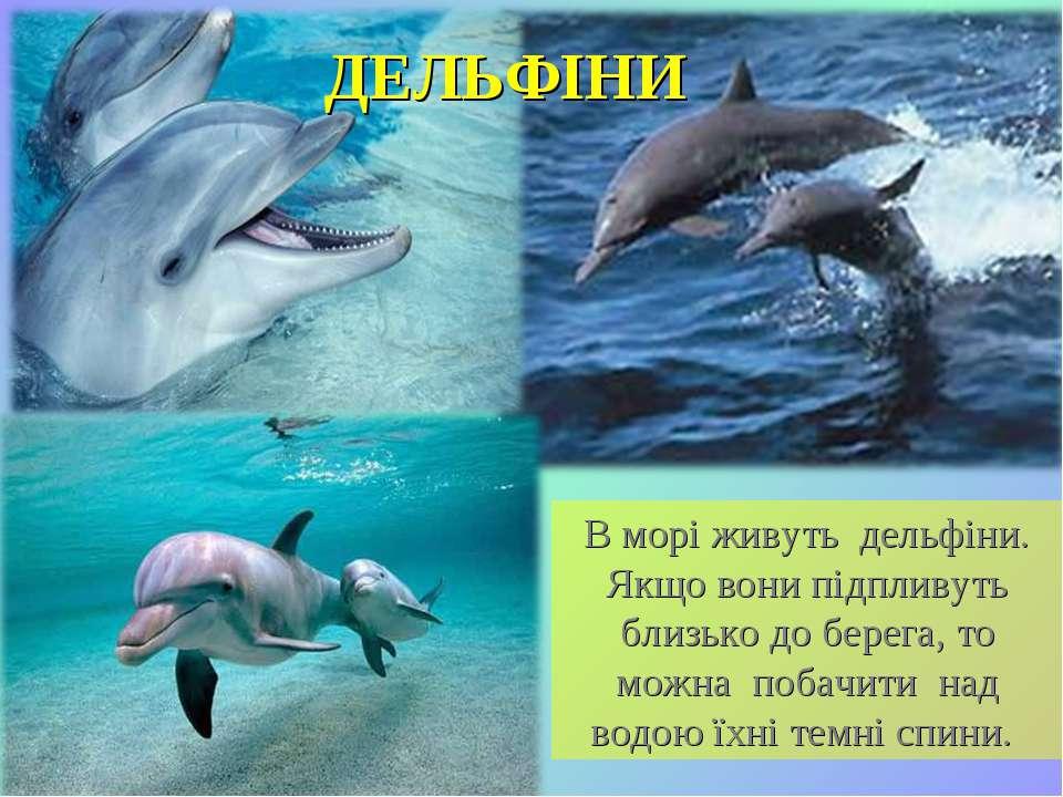 В морі живуть дельфіни. Якщо вони підпливуть близько до берега, то можна поба...