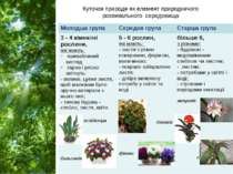 Куточок природи як елемент природничого розвивального середовища Молодшагрупа...